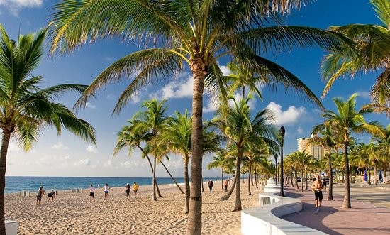 playa_palmeras_fort lauderdale